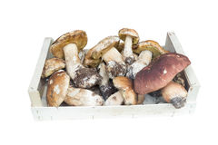 Mushrooms porcini in a basket on a white background Stock Photos