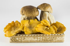Mushrooms: porcini and chanterelles. In basket on white background Royalty Free Stock Image