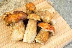 Mushrooms porcini. Fresh fragrant  porcini mushrooms  on cutting board Stock Photos