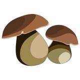 Mushrooms: porcini Royalty Free Stock Photography