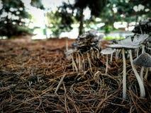 Mushrooms in Prague Royalty Free Stock Images
