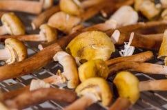 Mushrooms prepared for drying Stock Photo