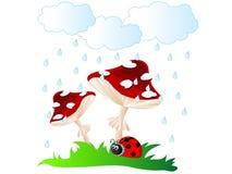 Mushrooms in rain. Ladybird under red mushroom umbrella in rain Stock Photography