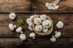 Mushrooms raw,  fresh and bio Royalty Free Stock Image