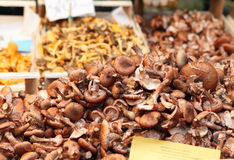 Mushrooms at the Rialto market Royalty Free Stock Photography