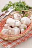 Mushrooms and rosemary in basket Royalty Free Stock Image