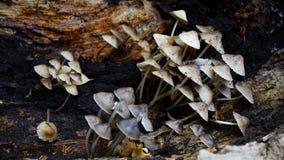 Mushrooms on rotting log Royalty Free Stock Photo
