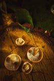 Mushrooms russula close up on a stump.  Royalty Free Stock Photo