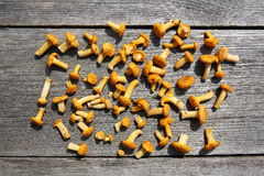 Mushrooms on the rustic table Royalty Free Stock Photography