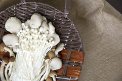 Mushrooms on sackcloth background Stock Photo