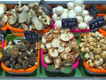 Mushrooms, Saint Josep Market, Barcelona Royalty Free Stock Photography
