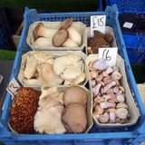 Mushrooms for sale Royalty Free Stock Image