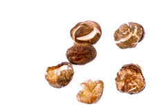 Mushrooms Series 01 stock image
