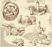 Mushrooms set stock illustration