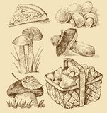Mushrooms set Stock Images