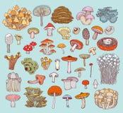 Mushrooms set icons,  illustration Stock Images