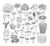 Mushrooms set icons,  illustration Stock Photography