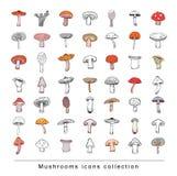 Mushrooms set icons, vector illustration. Stock Photo