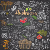 Mushrooms sketch doodles hand drawn set. Different types of edible and non edible mushrooms. Vector icons on Chalkboard background Royalty Free Stock Image