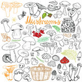 Mushrooms sketch doodles hand drawn set. Different types of edible and non edible mushrooms. Vector icons on Chalkboard background Stock Images