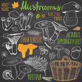 Mushrooms sketch doodles hand drawn set. Different types of edible and non edible mushrooms. Vector icons on white background Stock Photos