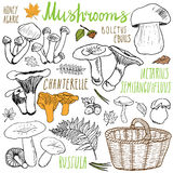 Mushrooms sketch doodles hand drawn set. Different types of edible and non edible mushrooms. Vector icons on white background. Royalty Free Stock Images