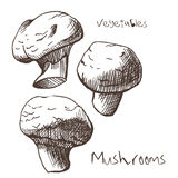Mushrooms Stock Photos