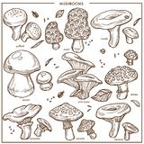 Edible mushrooms sketch vector icons champignon,. Mushrooms sketch icons. Vector edible champignon, chanterelle or morels and porcini cep mushroom, boletus and Royalty Free Stock Photography