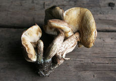 Mushrooms. Some mushrooms on the wooden floor stock image