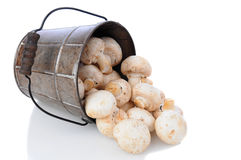 Mushrooms Spilling from Bucket Royalty Free Stock Images