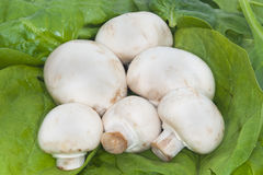 Mushrooms spinach green vegetables. Six different shaped fresh healthy mushrooms with spinach Royalty Free Stock Photography