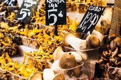 Mushrooms at a stand in the Boqueria Market, in Barcelona, Spain. Royalty Free Stock Image