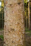 Mushrooms on stem of dead tree Royalty Free Stock Photos