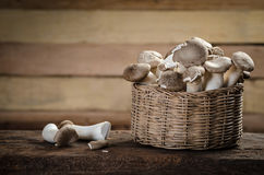 Mushrooms still-life Stock Photography