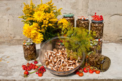 Mushrooms. Still life with yellow flowers and raw and pickled mushroms honey agaric Stock Image