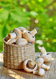 Mushrooms in straw basket Stock Photo