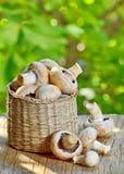 Mushrooms in straw basket Stock Photo