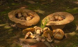 White mushrooms in two straw hats on royalty free stock photography
