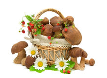Mushrooms, strawberries and chamomile flowers on white backgroun Stock Photos