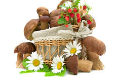 Mushrooms, strawberries and chamomile flowers on white backgroun Stock Photo