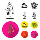 Mushrooms, strawberries, corn, cucumber.Plant set collection icons in black, flat style vector symbol stock illustration Royalty Free Stock Photo