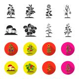 Mushrooms, strawberries, corn, cucumber.Plant set collection icons in black,flet style vector symbol stock illustration Royalty Free Stock Images
