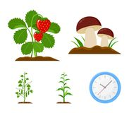 Mushrooms, strawberries, corn, cucumber.Plant set collection icons in cartoon style vector symbol stock illustration web Stock Photography