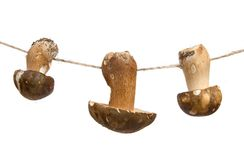 Mushrooms on a string Stock Images