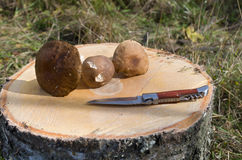 Mushrooms on a stump. Autumn, forest, mushrooms on a stump, knife on a background of grass Stock Photo