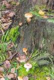 Mushrooms and stump Stock Photo