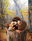Mushrooms on stump Stock Photos