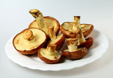Mushrooms Suillus luteus Stock Photo