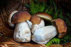 Mushrooms in summer  season Stock Images