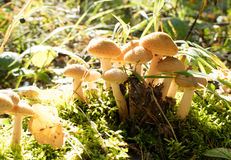Mushrooms in the sun. Bright sun and lots of mushrooms Stock Images
